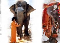 column Bewustzijn van Sai Gita
